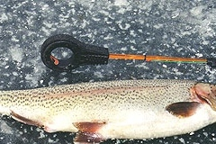 9. Rainbow Trout from Lake Eden, Alberta